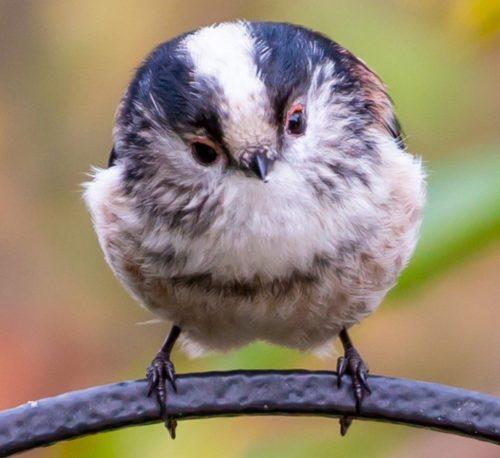 あの鳥の名前はなんだろう?冬の北の野鳥と鳴き声の38種類まとめ【円山公園や旭山記念公園(札幌)】
